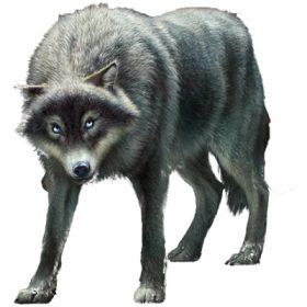 Briggan - Spirit Animals