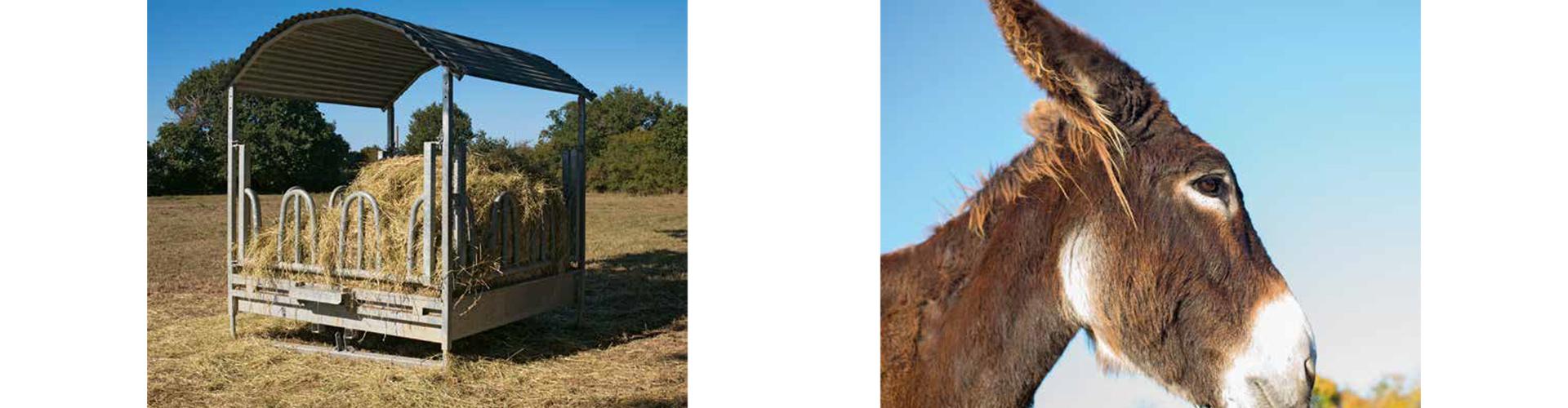 Mijn eerste fotoboek op de boerderij